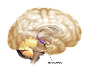Wanadi22. Reflexiones Psico-antropológicas: El Hipocampo y las ...